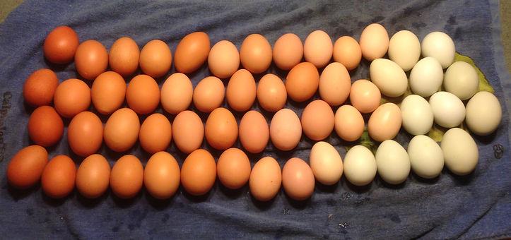Muddy Springs Farm Idaho Eggs