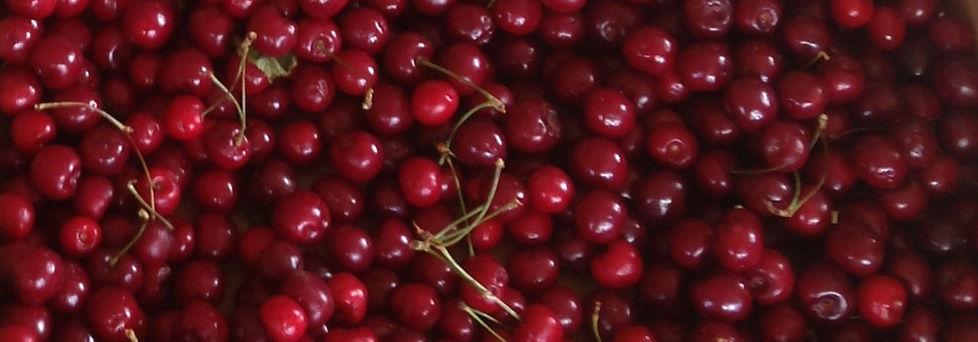 Muddy Springs Farm CSA Moscow Idaho Fruit