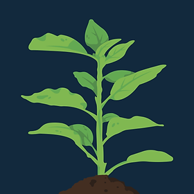 Plant GraphicCover-02.png