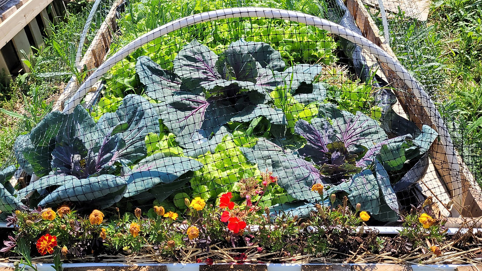 Garden Consult and Maintanence