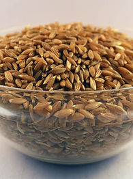 khapli wheat.jpg