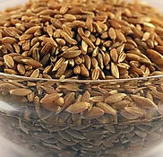 khapli wheat whole.jpg
