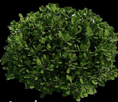 bush_PNG7202.png