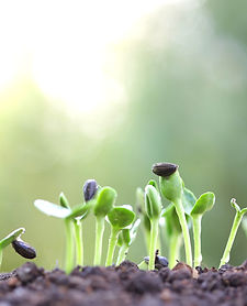 Canva - Growing sprout_edited.jpg