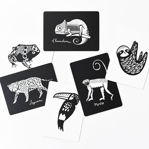 Liste Echevin - Callens - Cartes noir et blanc