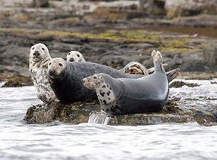 Seals-Mather.jpg