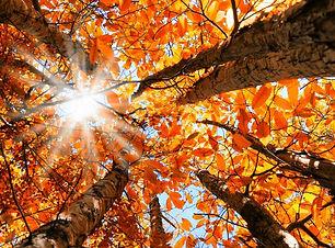Autumn Solstice.jpg