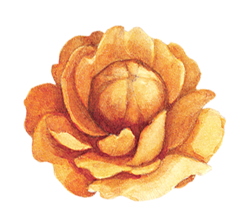 Yellow%20Flower_edited.png
