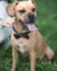 Fotos von Hunden bei der Hochzeit, Hochzeitsfotograf in und um Zürich, Janine Benz Photography