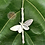 Thumbnail: The Fine Silver Bamboo Moth Necklace