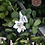 Thumbnail: 925 Sterling Silver Mom's Flower Garden Necklace