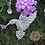 Thumbnail: 925 Sterling Silver Calliope Hummingbird Necklace- Avail at Stevans