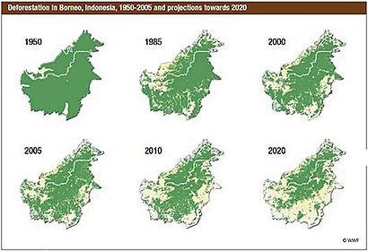 Borneo image.jpg