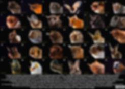 bat diversity collage.jpg