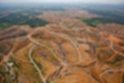 deforestation palm oil.jpg