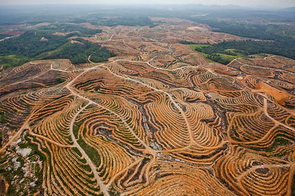 deforestation palm oil.jpg