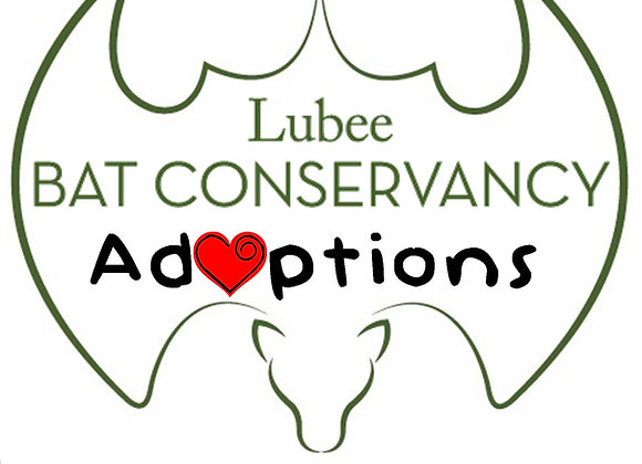 Lubee Adoption Level 2