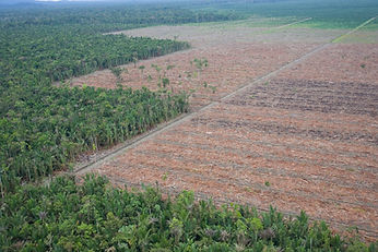 SE Asia deforestation.jpg