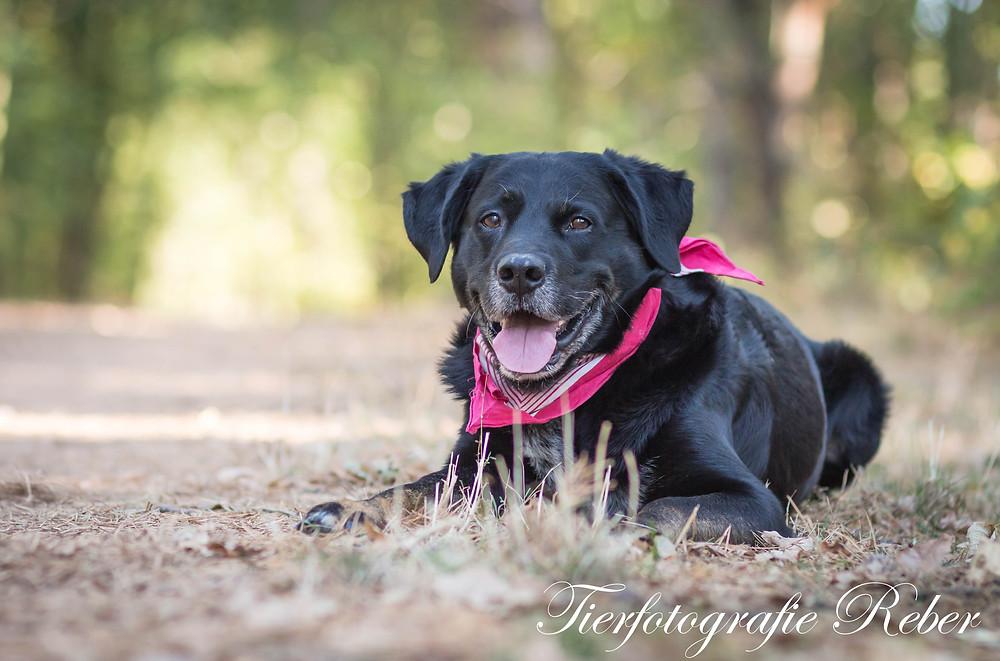 Arko, Hund Tierfotografie