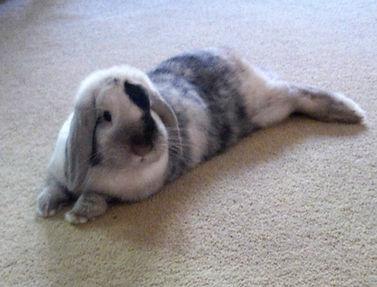 rabbit sitting norwich