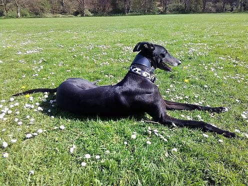 greyhound norwich