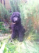 Jordie in my garden.JPG