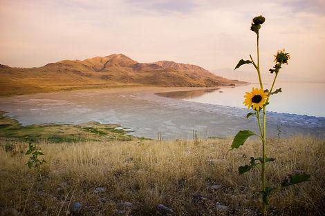 Weber Davis Photo-White_Rock_Bay_Sunset.