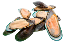 Green-Half-Shell-Mussel-3.png