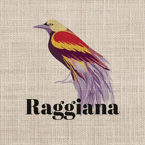 Papouasie Nouvelle Guinée Raggiana 250g