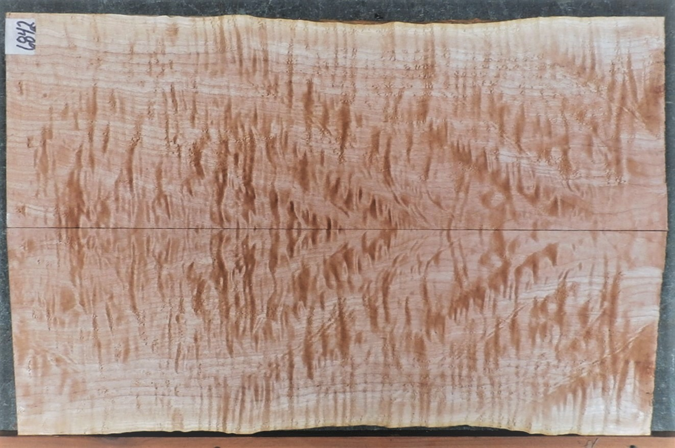 Quilted Maple #6842