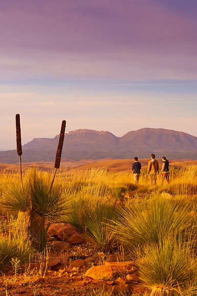 Outback Flinders Ranges Air Touring