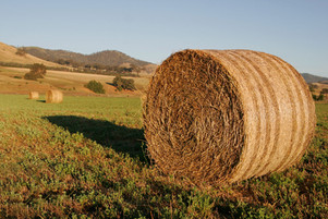 Straw Bales.jpg