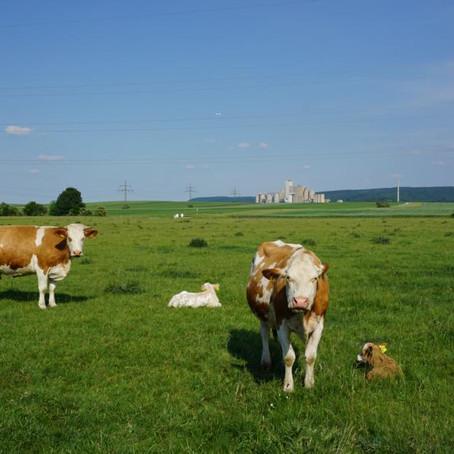 """Unsere Kühe sind wieder auf der """"Hoad""""!"""