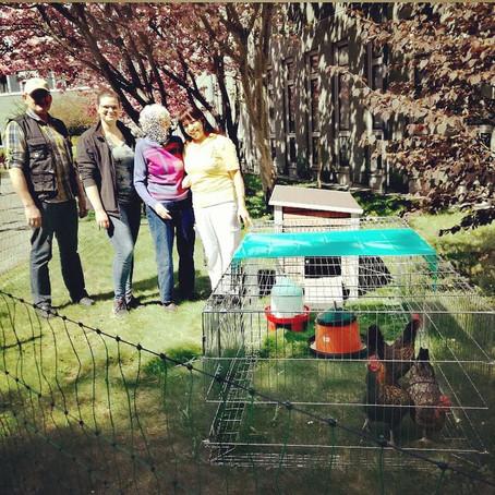 Bio Hühner vom Biohof Unger absofort auch im Haus Prater zu finden!