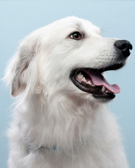 Dog's Portrait_edited.jpg