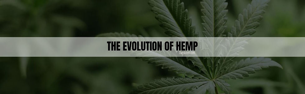 The evolution of hemp and the mny uses of it.