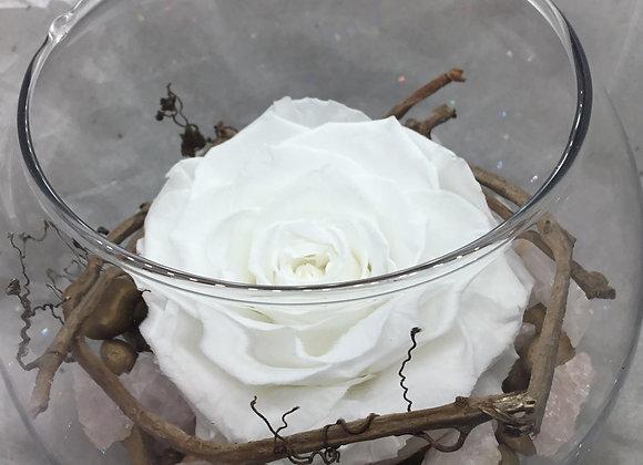 Large Preserved White Rose Bowl
