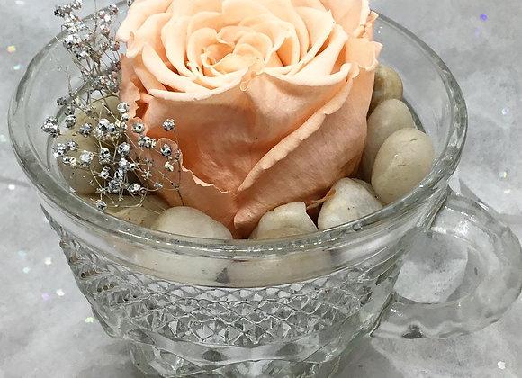 Preserved Peach Rose Teacup