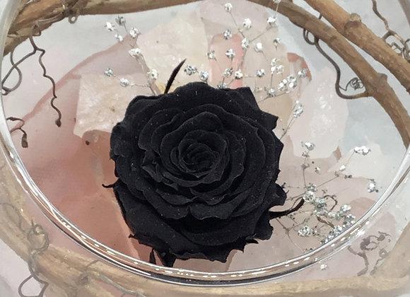 Preserved Black Rose Bowl