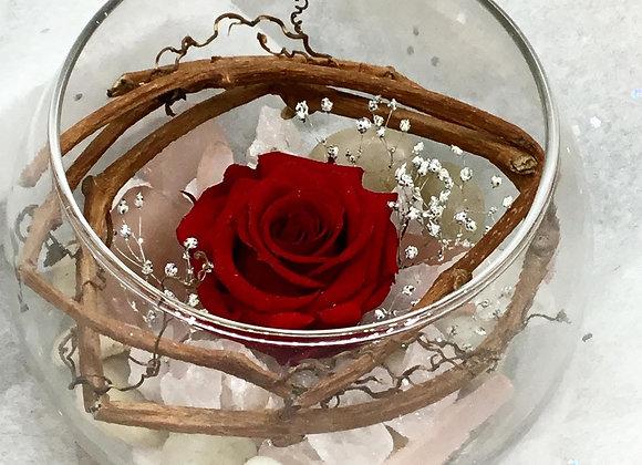 Preserved Red Rose Bowl