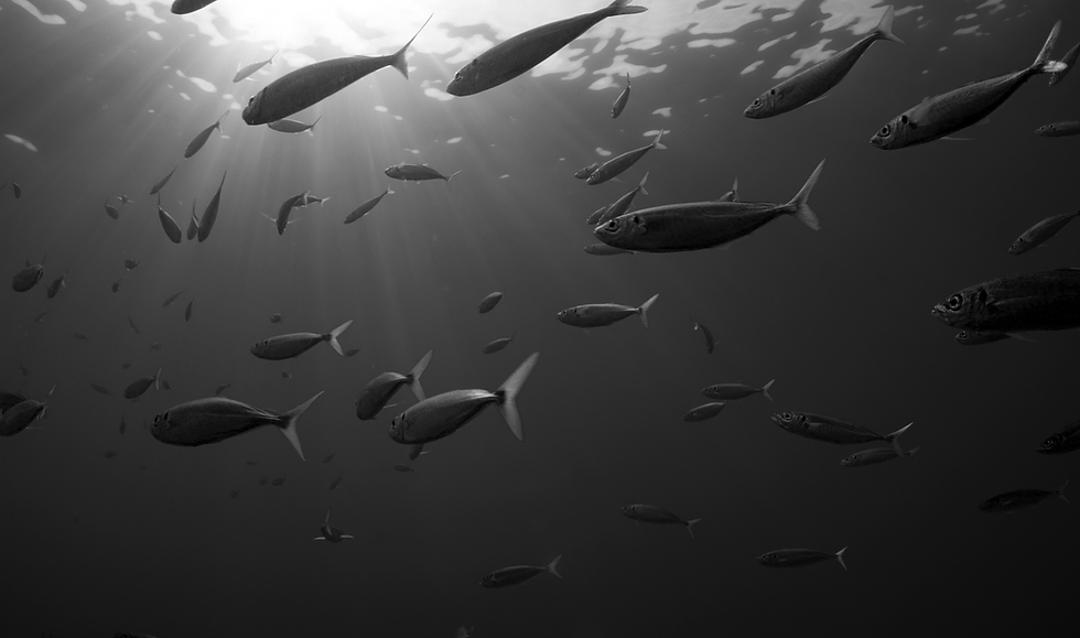 Fish_CBT_11.07.png