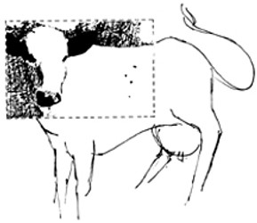 image of cow shown optometrist to explain vision problems and dylexia
