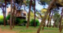diaschow Kopie_edited.jpg