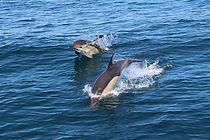 dolphins-all.jpg