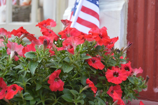 Red Flowers And Flag