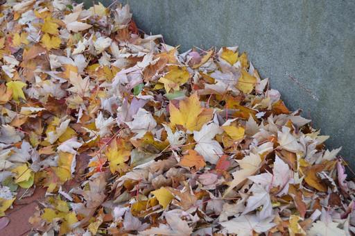 Autumn Leaves Curb