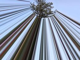 Circle Tree Rays Brown