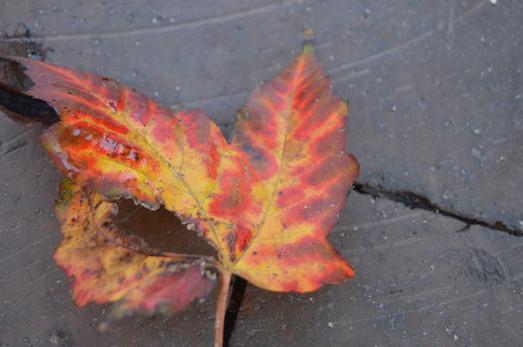 Burn Leaf