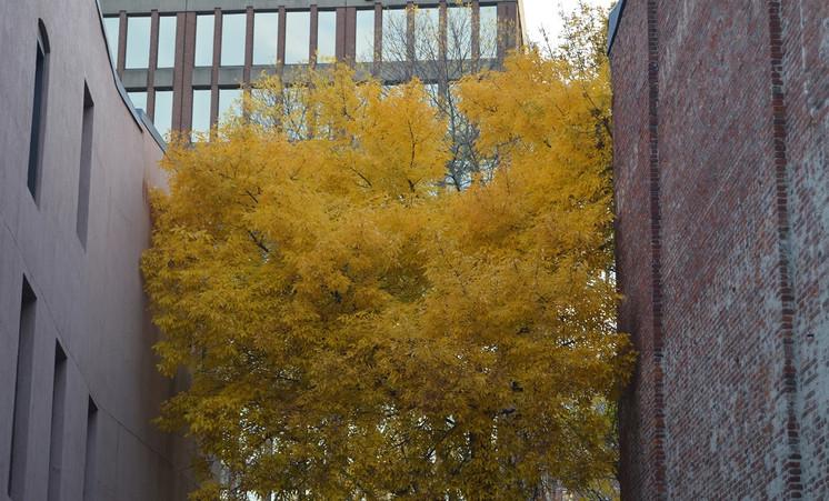 City Autumn