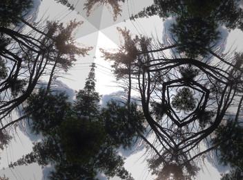 Spider Web Trees